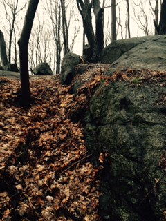 The crevice filled with fallen leaves at Proctor's Ledge in Salem Massachusetts.